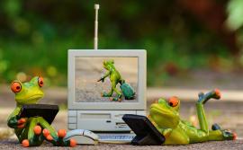 Frösche Computer Laptop